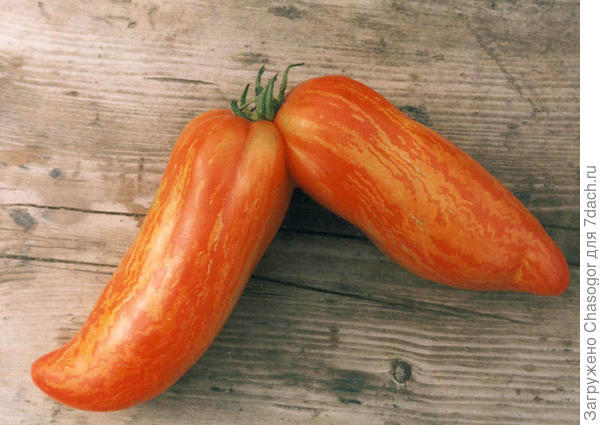 фасциация плодов