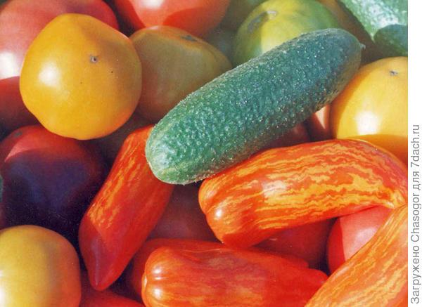 овощи 2002