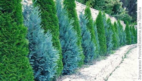 Защита от ветра растениями. Фото с сайта udec.ru