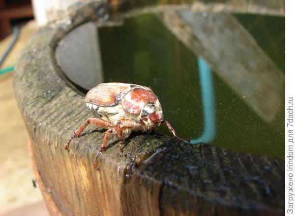 Визит жука