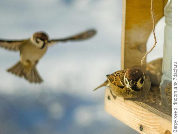 Летают тут всякие, обедать мешают