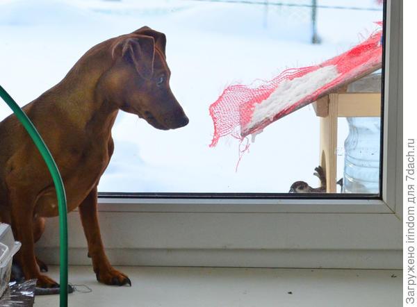Сидит, наблюдает за птичками. Знает, что если пошевелится - они улетят.