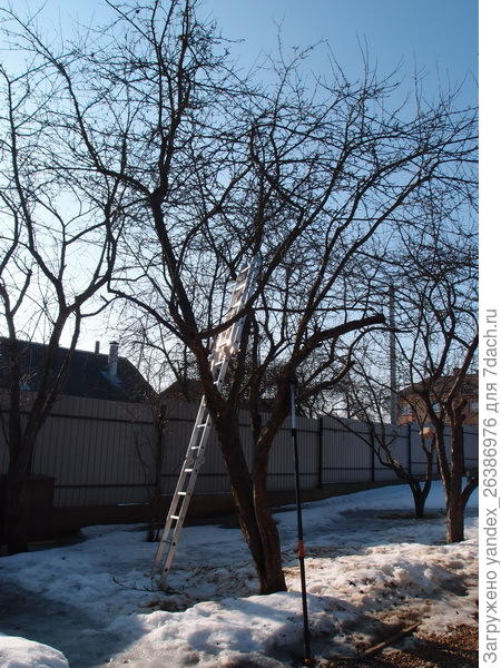 Весенняя обрезка деревьев