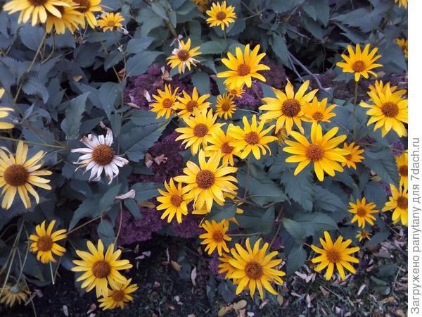 цветет не переставая