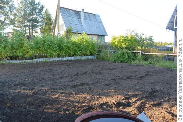 Наше картофельное поле