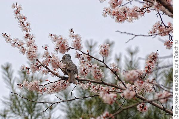 Певец весны