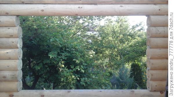 А из нашего окна калина красная (пока зеленая видна) видна.