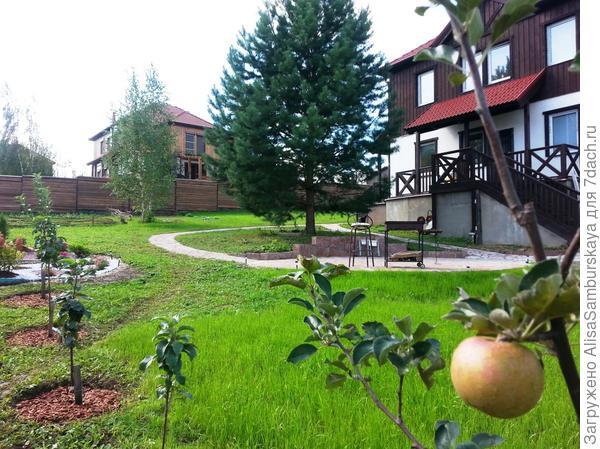 первые яблочки))