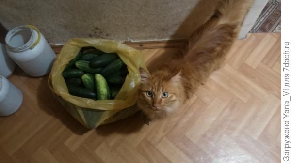 котя и огурцы