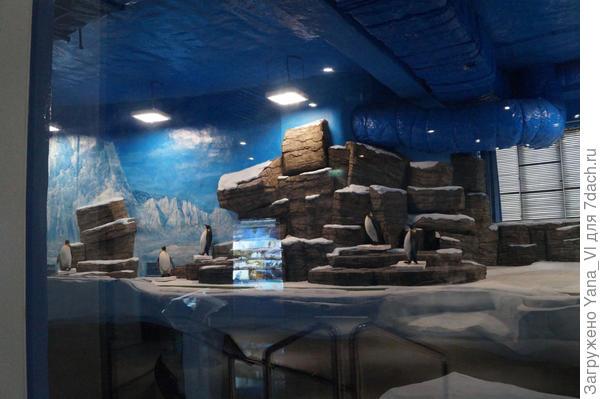 помещение для пингвинов