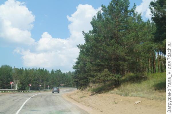 сосновый лес у дороги