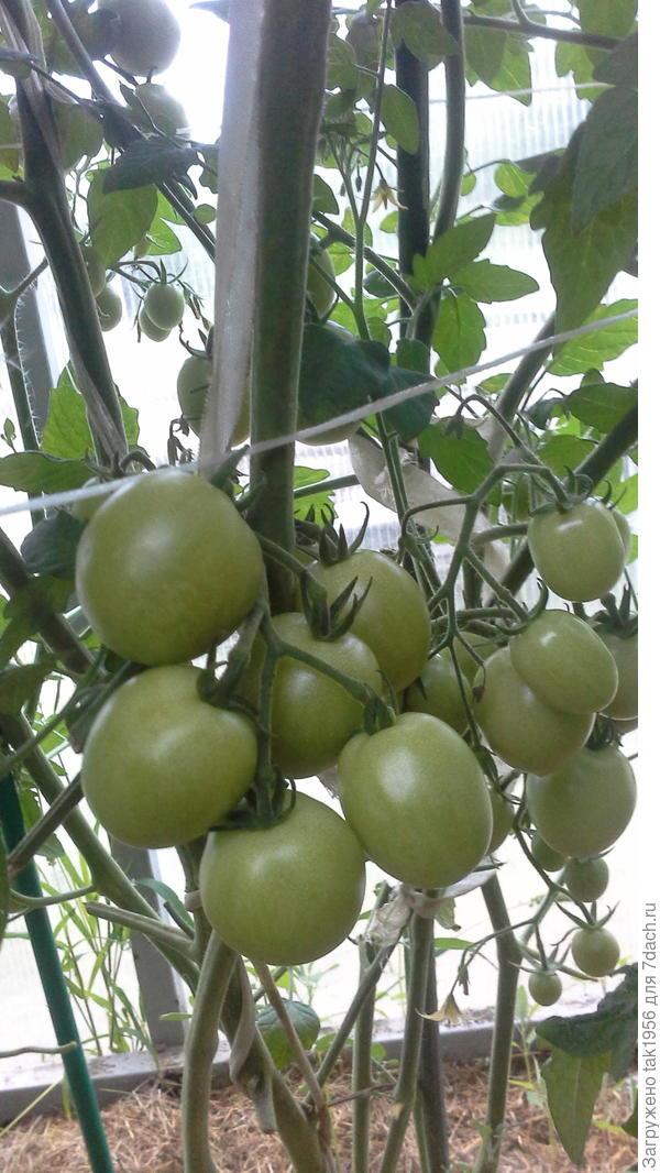 Черри Жёлтая вишня