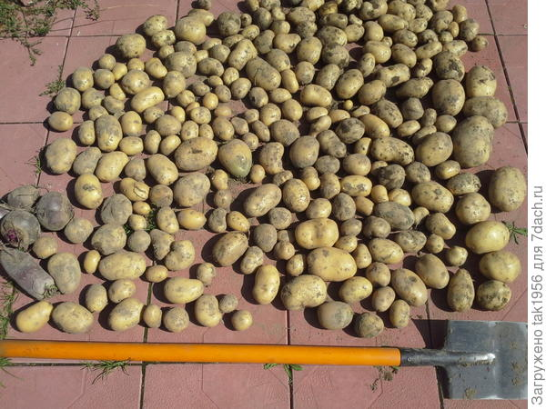 Гала из 2 кг семян