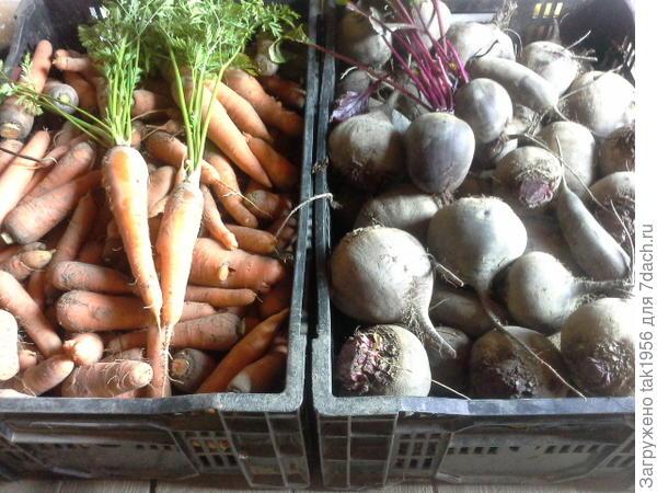 4 мешка моркови и 5 мешков свеклы