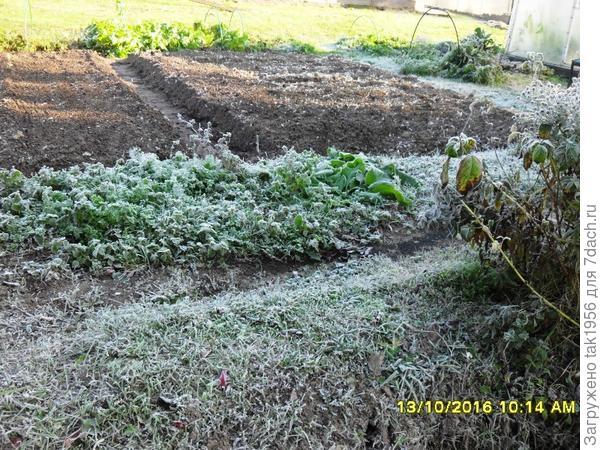 Вот, можно готовить бороздки под посев, а сеять еще рано...