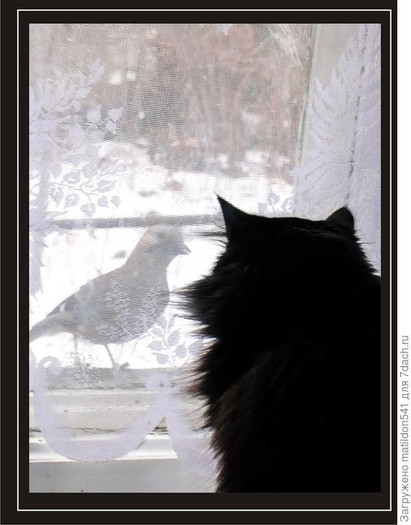 сойка и кошка