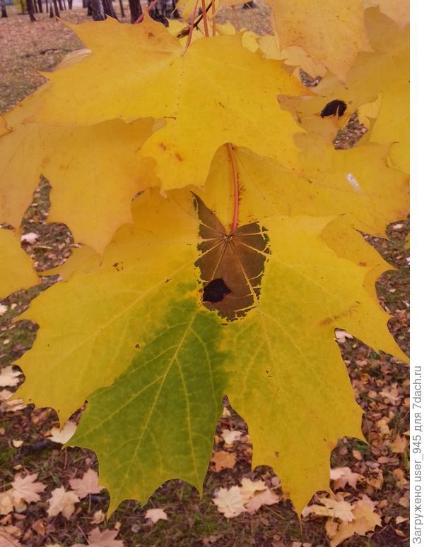 Необычная окраска листа