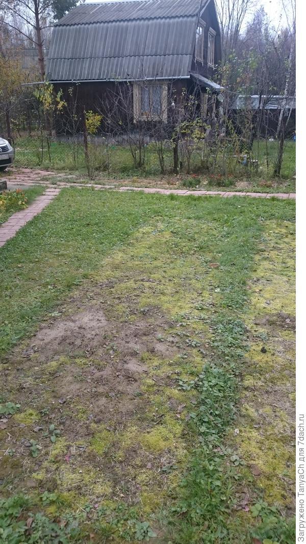 Будущий газон)))