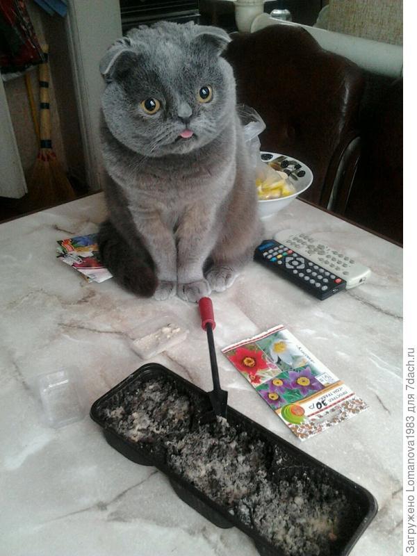 Помогает во всем))))