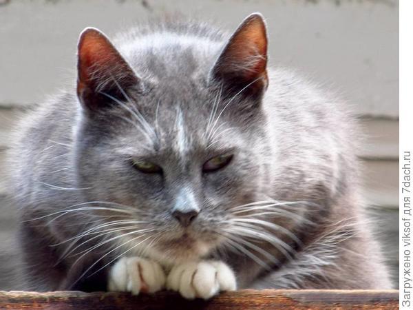 Так что это правда, что в Семидачье выходные с кошками и котами? То-то я смотрю и наши коты побежали, ну и от меня привет семидачникам...