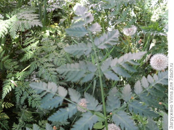 растение 2