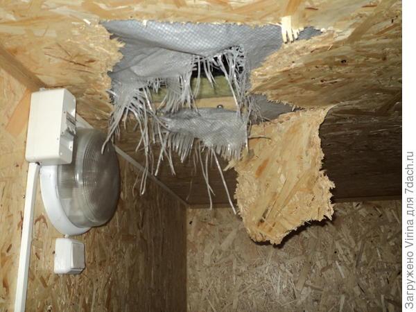 """и потолок """"прогрызли мыши"""""""
