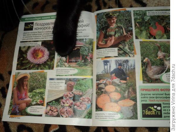 фото из журнала и Дашкина лапка