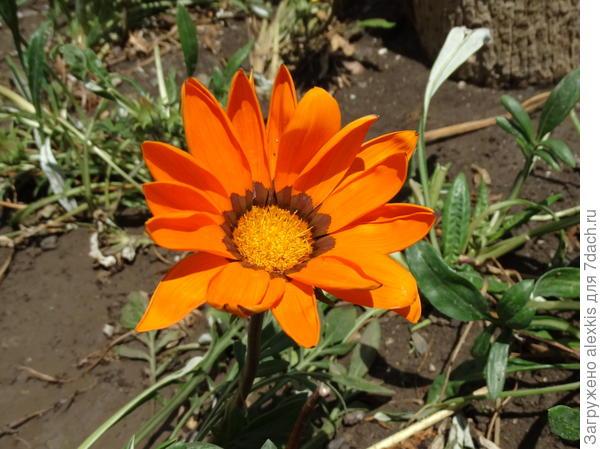 цветок