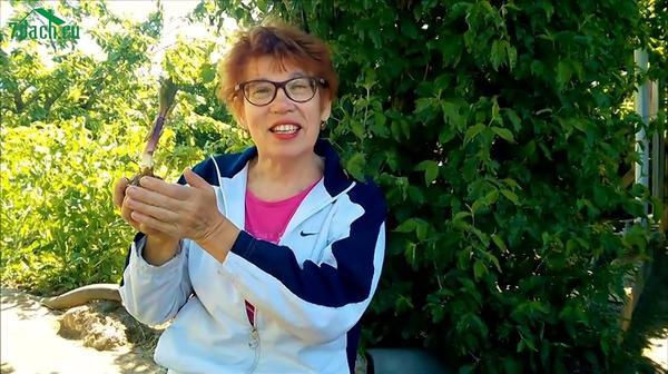 Ирина рассказывает о лилии