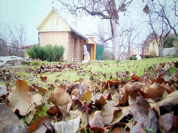 Опавшие листья в саду