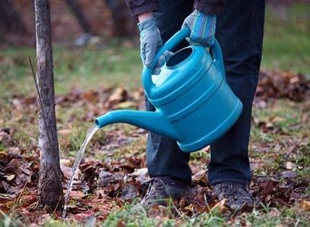 Влагозарядный полив деревьев. Фото сайта dachadecor.ru