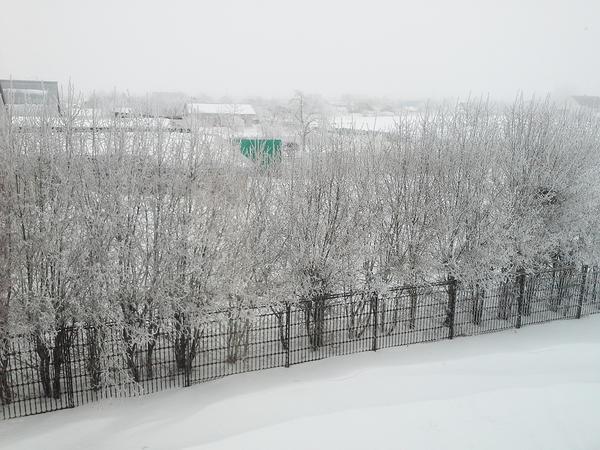 Живая изгородь из боярышника зимой