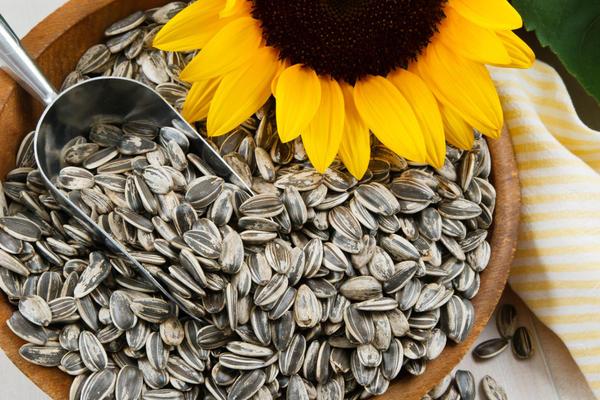 Подсолнух размножается только семенами