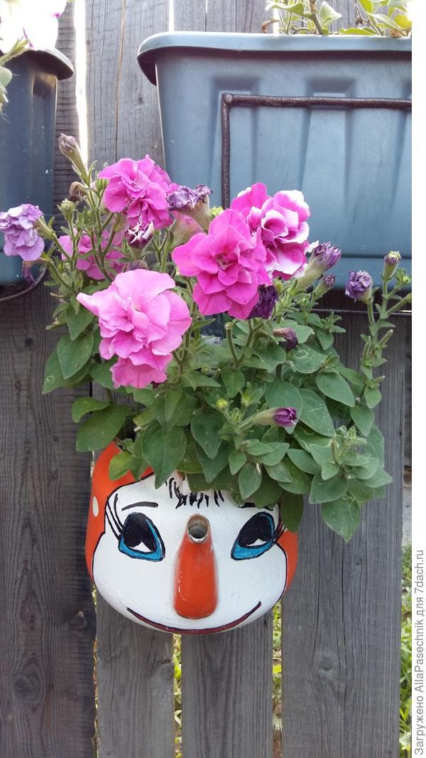 цветы в старом чайнике
