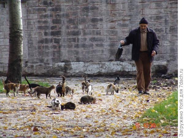 Около мечетей, живет очень много котов и кошек, и из всех близлежащих ресторанчиков и мясных лавок им приносят мясные обрезки. Коты приходят больше потусоваться, чем поесть, и выразить свою благодарность тому кто их пришел покормить.