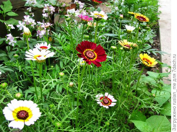 неопознанный цветок