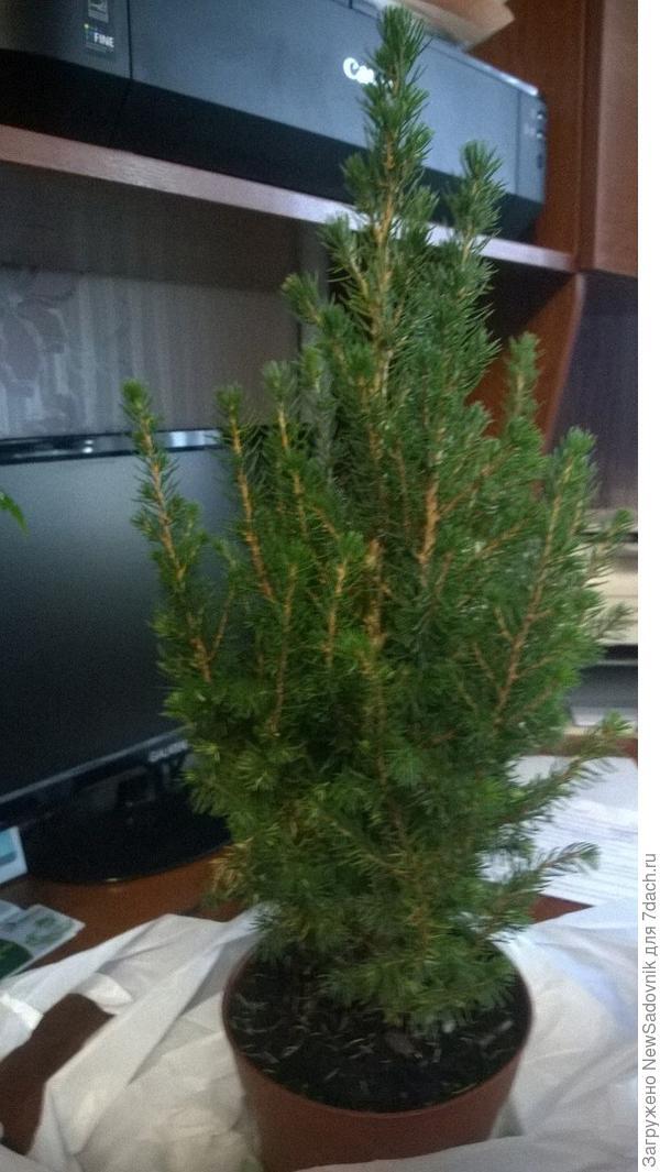 К чему снится елки сажать 83