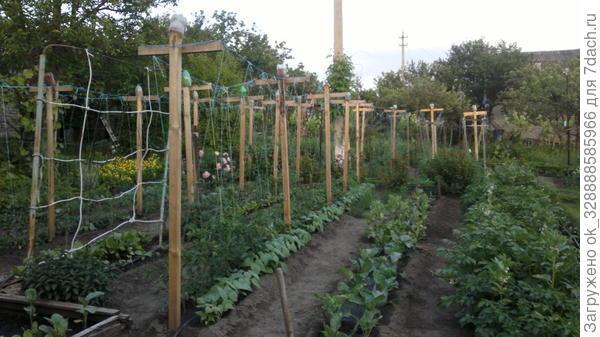Огород в мае.