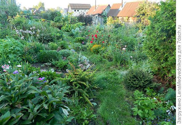 Вот так выглядит мой сад