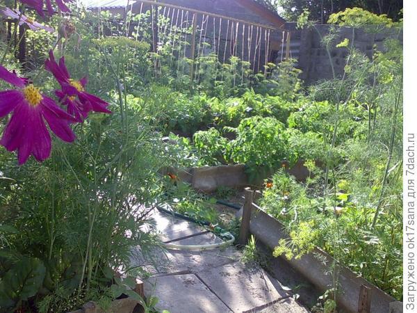 Огород в конце июня.