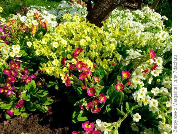 Неприхотливые цветы для кладбища