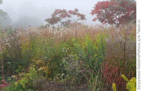 Ферма Пита Удольфа в Hummelo. Фото с сайта http://oudolf.com/garden/oudolf-hummelo
