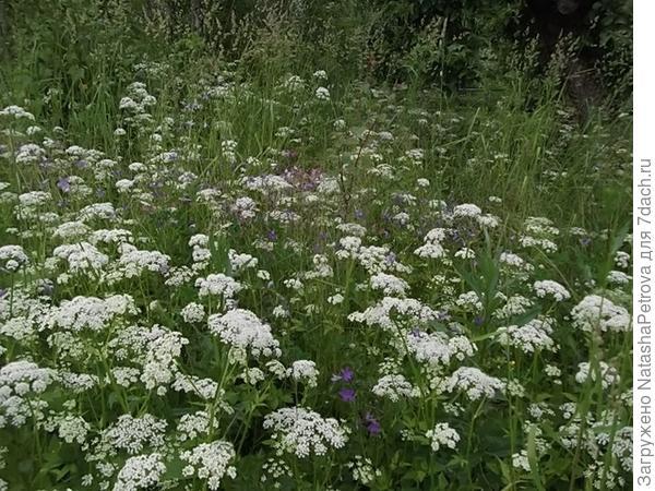 Естественная растительность на лугу
