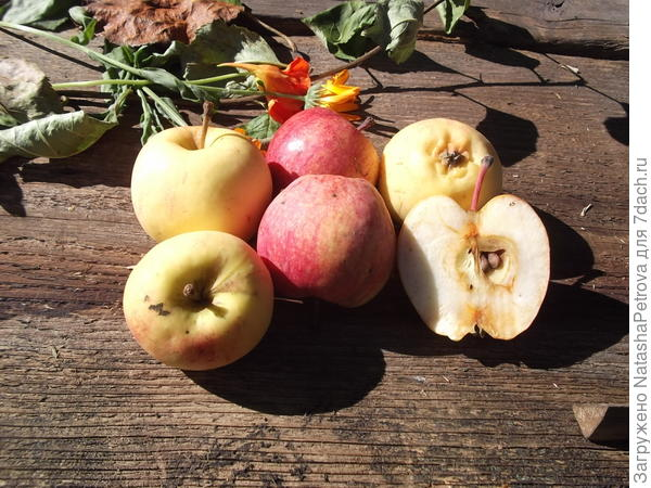 Яблоки №1