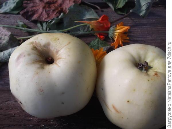 Вид яблок со стороны плодоножки и чашелистиков