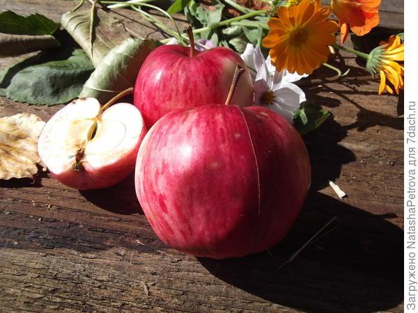 Яблоки с яблони № 4