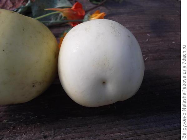 Белое яблоко