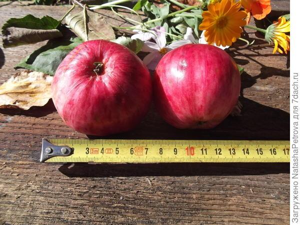 Видимые швы на кожице яблока № 4