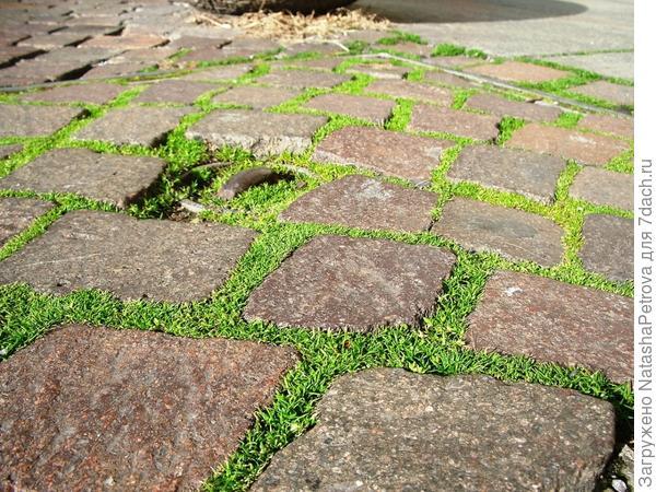 Трава, растущая между камнями брусчатки