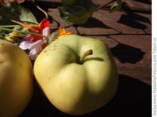 Верхняя сторона яблока